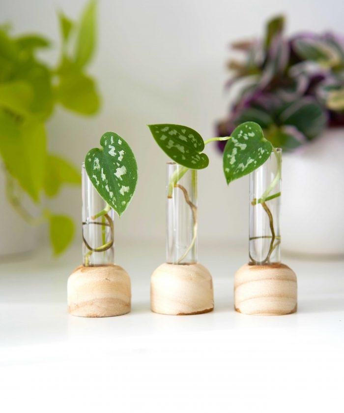 petites stations de bouturage en bois