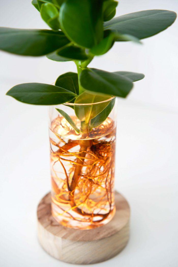 soliflore lumineux pour bouture ou culture en hydroponie