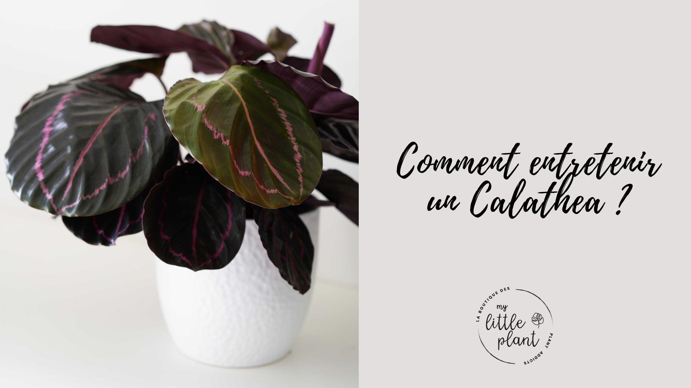 Nos cache-pots rose en céramique (3)