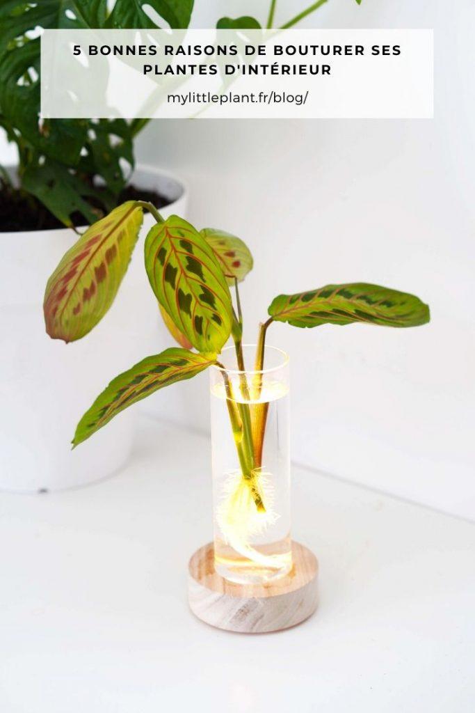 5 bonnes raisons de bouturer ses plantes d'intérieur