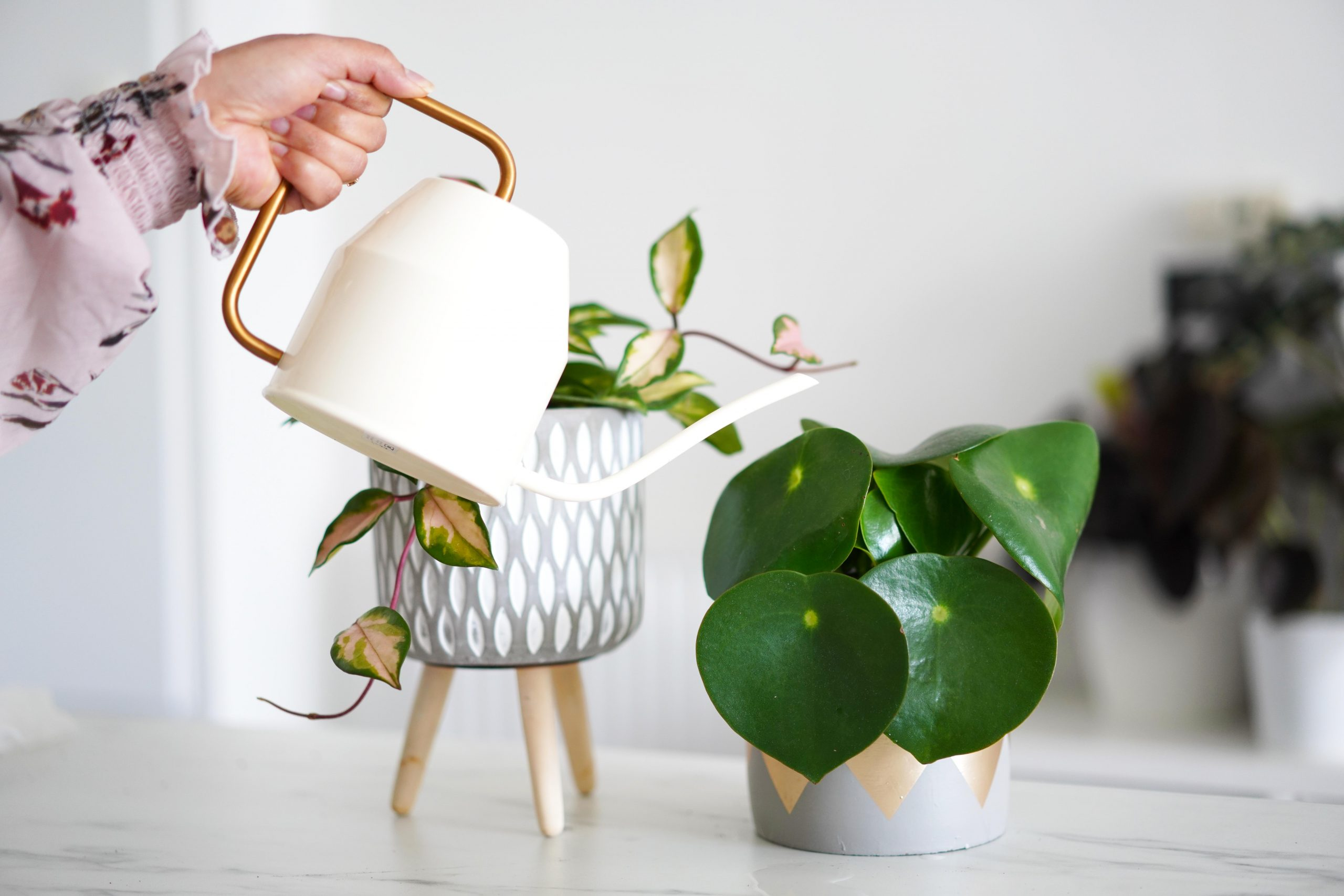 erreur_arrosage_plantes_vertes_3
