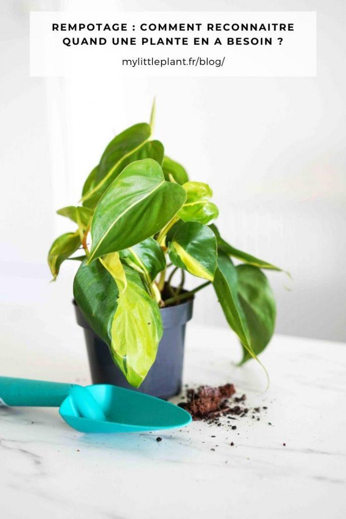 Dans cet article découvrez les 4 signes qui ne trompent pas et qui vous alerterons sur les besoins en rempotage de vos plantes.