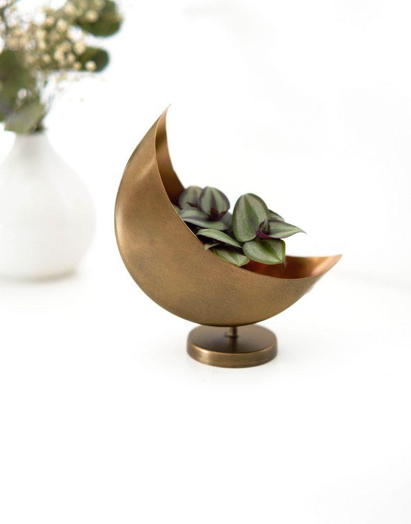 Tradescantia zébrina dans un cache-pot doré en forme de lune