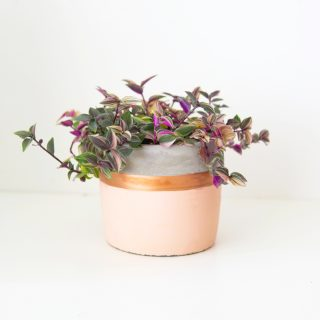 cache_pot_rose_gold_my_little_plant_2