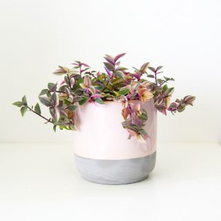 cache_pot_rose_my_little_plant_2