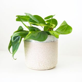 cache_pot_texturé_my_little_plant_2