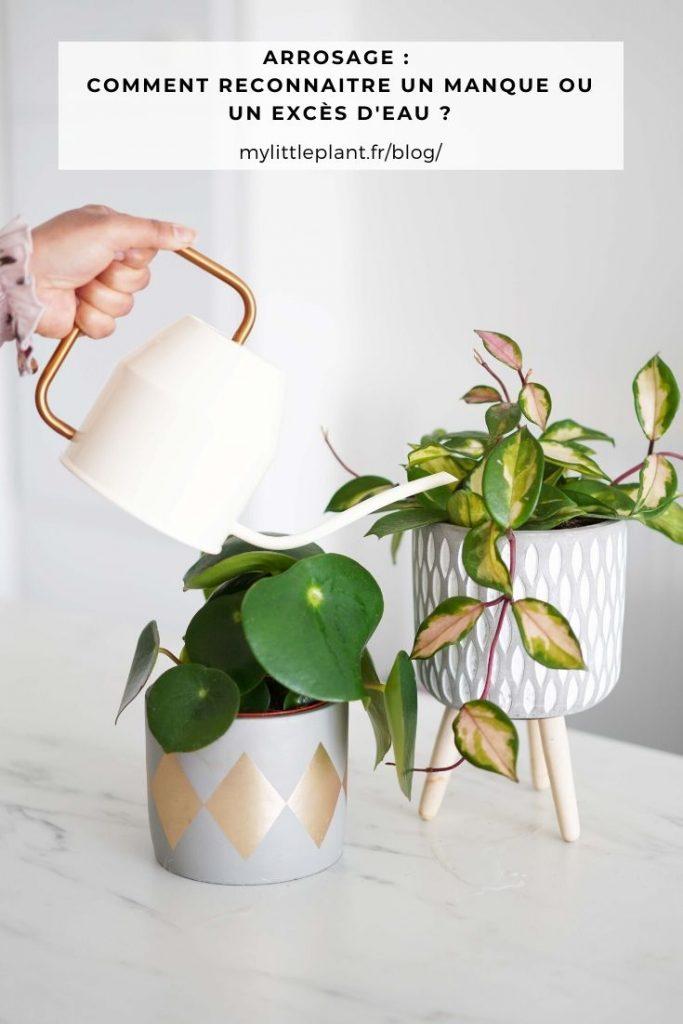conseils_arrosage_plantes