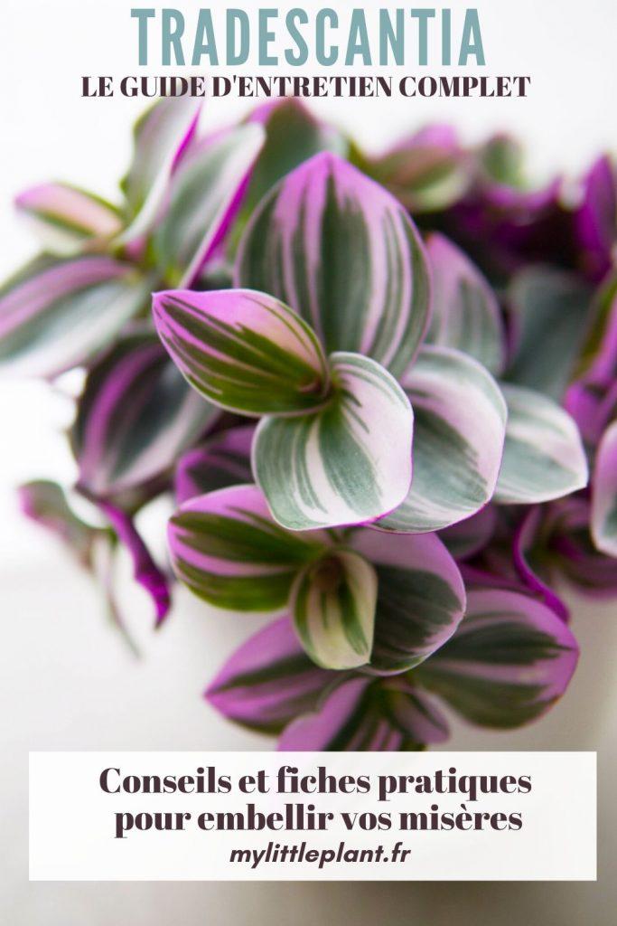 Conseils et fiches pratiques pour embellir vos misères par mylittleplant.fr
