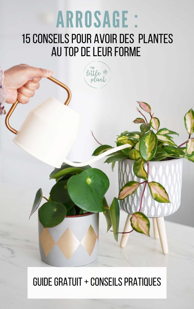 conseils d'arrosage pour vos plantes d'intérieur