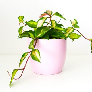 cache-pot en céramique rose 14cm