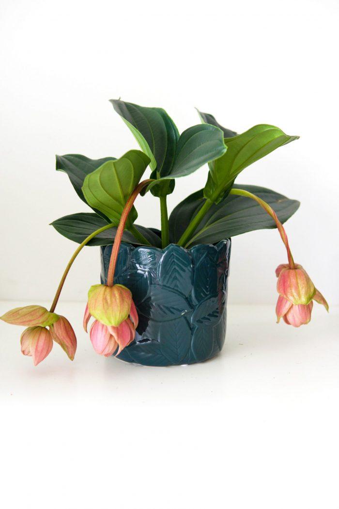 cache-pot bleu avec relief feuilles