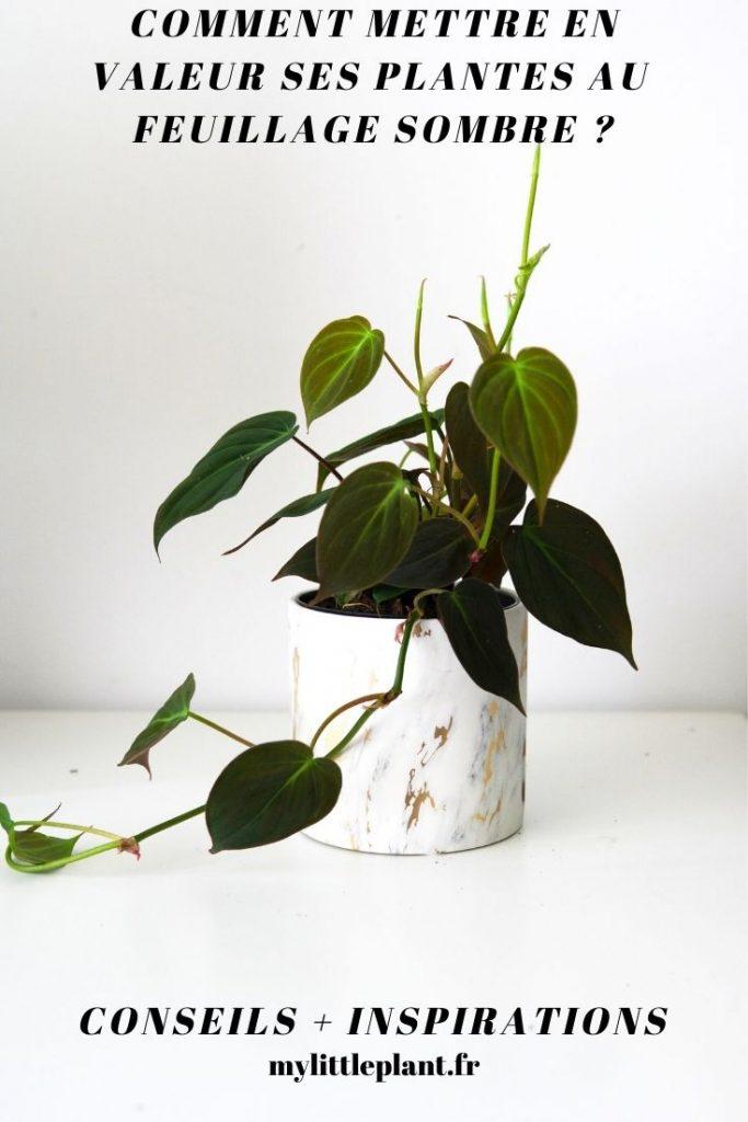 Vous collectionnez les plantes au feuillage sombre mais vous avez du mal à trouver les cache-pos idéaux pour les mettre en valeur comme il se doit ? Découvrez nos conseil, nos inspirations et nos accessoires.