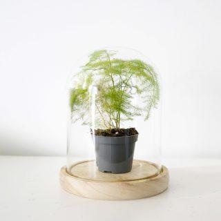 cloche pour plante