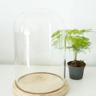 cloche_plantes_5