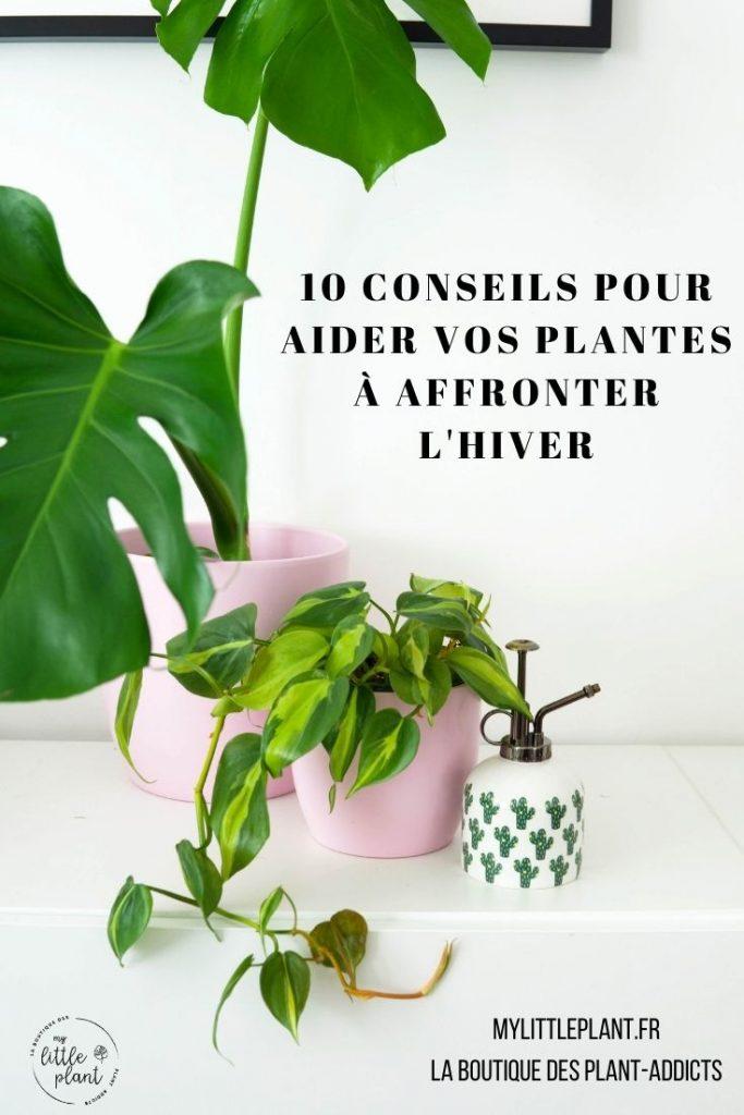 10 conseils pour aider vos plantes à affronter l'hiver