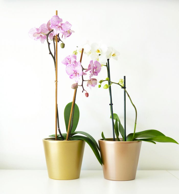 cache pots orchidées